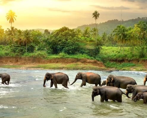 tour_1_srilanka